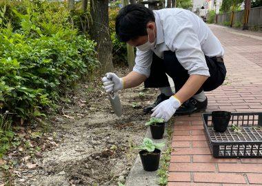 6月の美知メセナ活動<br />【ひまわりの苗を植えました】